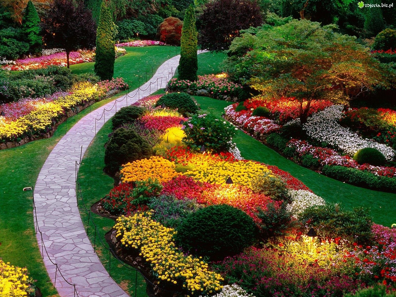 Zdjecie Ogrod Kolorowe Kwiaty
