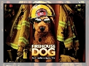 Firehouse Dog, pies, strażak